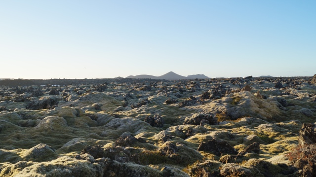 Lava fields in Reykjanesbar, Iceland